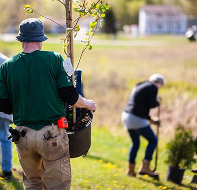 Tree Planting County Park  Lake Superior News