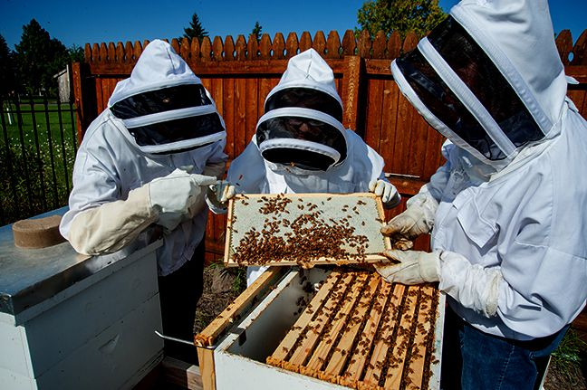 UW-Superior  Save Bees build a Beehive Wind Shield™,   Lake Superior News