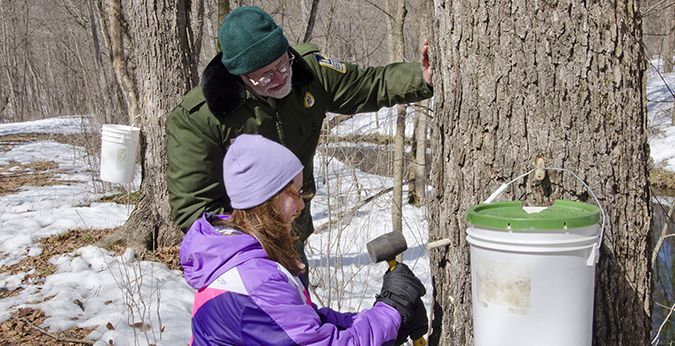 White Water Maple Syrup  Lake Superior News